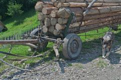 Rural horse cart. Filled with wood logs guarded by a dog Royalty Free Stock Photos