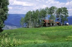 Rural house in an aspen grove in Rocky Mountains Royalty Free Stock Image