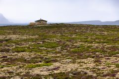 Rural House at Blooming Moss Field in Iceland Royalty Free Stock Images
