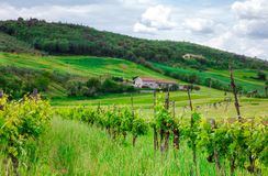 Rural house on the hill among vineyards. Tuscany, Italy royalty free stock photography