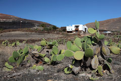 Rural house on Lanzarote, Spain royalty free stock images