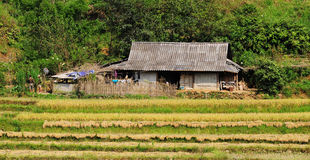 Rural house with rice field in Sapa, Vietnam Stock Photos