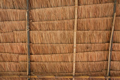 Rural house roof made of cogon grass,thatch roof background Royalty Free Stock Images
