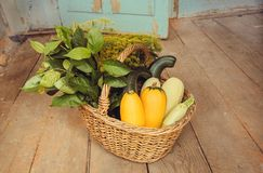 Rural house with season basket and ripe organic vegatables, zucchini and greens. Gardener harvest during autumn time Royalty Free Stock Photography