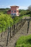Rural house with a small vineyard. Croatian Istria peninsula is an ideal vacation spot. With a mild mediterranean climate, many locals enjoy making their own Stock Images