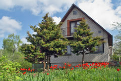 The rural house and tulips Stock Photos