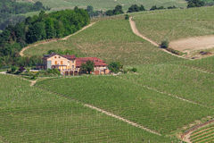 Rural house and vineyards in Italy. Stock Photo