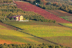 Rural house and vineyards in Piedmont, Italy. Royalty Free Stock Images