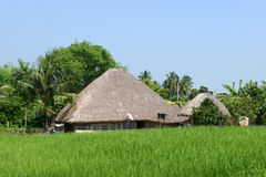 Rural Hut. A thatched hut on a agricultural land in the rural India Stock Photo