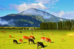 Rural idyll in Chile Royalty Free Stock Photography