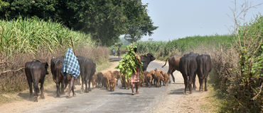 Rural India Stock Photography