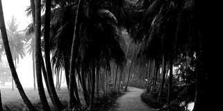 Rural indian road. Road in between coconut trees Royalty Free Stock Photography