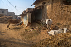 Rural Indian village with cattle, mud houses and muddy village road. Stock Photo