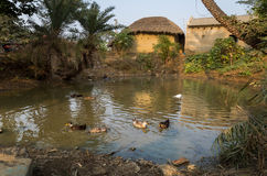 A rural Indian village pond with ducks surrounded with mud houses. Stock Photo