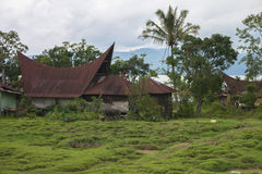 Rural Indonesia Landscape Royalty Free Stock Photos