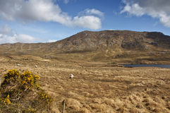 Rural irish Photography Landscape from Ireland. Photo Connemara Rural irish Photography Landscape from Ireland stock images
