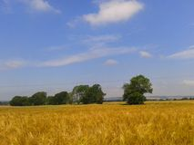Rural. Kent, crops, countryside, summer, landscape Royalty Free Stock Photography