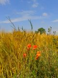Rural. Kent, crops, countryside,  summer, landscape Royalty Free Stock Photos