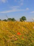 Rural. Kent, crops, countryside, summer, landscape Stock Images
