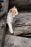 Rural kitten Stock Image