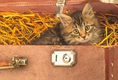 Rural Kitten Looks Stock Photography