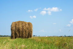 Rural landscape Stock Images