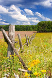 Rural landscape. Picket fence in the field Stock Image