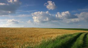 Rural landscape. Barley field, road and cloudy sky Stock Images