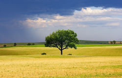 Rural Landscape. Yellow fields after harvest and tree landscape Stock Photos