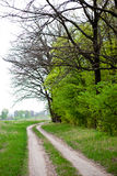 Rural landscape. With road, meadow, trees and bushes Royalty Free Stock Photo