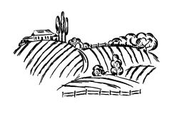 Rural Landscape. Graphic illustration - the landscape with fields and vineyards vector illustration