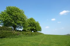 Rural Landscape. Landscape View of a Field and Trees in Summer Stock Photo