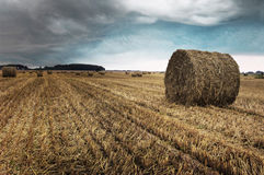 Rural landscape. Stock Photography
