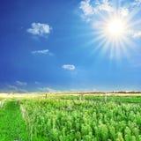 Rural landscape. Stock Image