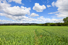 Rural landscape Stock Photos