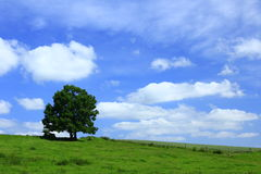 Rural landscape. With tree and blue sky in Germany Stock Images
