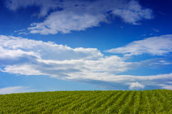 Rural Landscape. Looking over a green landscape to the horizon, under a dramatic blue sky with gathering clouds stock photos