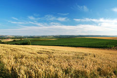 Rural landscape. Beautiful european rural landscape with wheat field in foreground stock photos