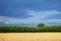 Rural landscape. Beautiful rural landscape with wheat field in foreground Royalty Free Stock Image