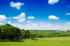 The rural landscape. The tree, green field, white clouds. The rural landscape Stock Photography