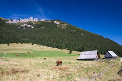 Rural Landscape. Rural Mountain Landscape With Cows and cottages stock image