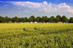 Rural landscape. Picturesque rural landscape with wheat Stock Photo