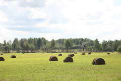 Rural landscape. The rural landscape, swaths in the field.  Russia Stock Photography
