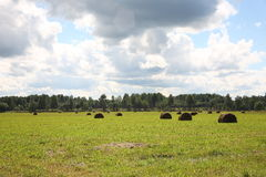 Rural landscape. The rural landscape, swaths in the field.  Russia Stock Photo