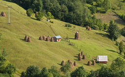 Rural landscape. Romanian rural landscape with many hayricks on a green slope Royalty Free Stock Images