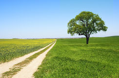 Rural Landscape. Country Road and Tree - Landscape Stock Images