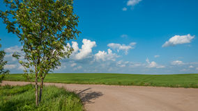 Rural landscape. agricultural field behind the dirt road under the blue cloudy sky. Rural landscape. the summer green agricultural field behind the dirt road Royalty Free Stock Photography
