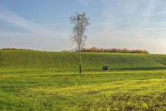 Rural landscape, agriculture farmland with crops, Poland, Europe Royalty Free Stock Image