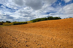 Rural landscape, agriculture farmland with crops, Poland, Europe Royalty Free Stock Photos