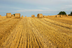 Rural landscape, agriculture farmland with crops, Poland, Europe Stock Photos